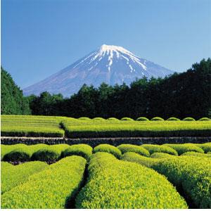 阿里旅行 杭州-日本大阪静冈5天往返含税机票首都航空
