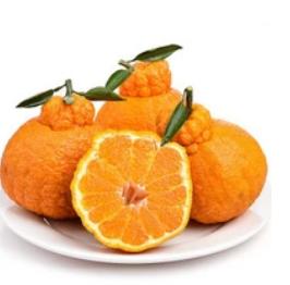 15.8元包邮!科乐吉 四川丑柑不知火柑橘 5斤