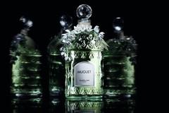 Guerlain娇兰释出一年一度限量版铃兰香水