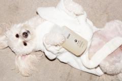 OUAI 新宠物洗发水 Fur Bébé 系列现已发售