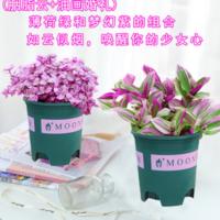 5.8元起包邮!馥郁芳华 油画婚礼吊兰桌面盆栽